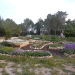 jardín botánico visitable visitas guiadas ibiza