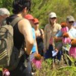 Jardín visitable botánico ibiza sànima esencia viva venta directa
