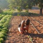finca ecológica sànima hierbas de ibiza melisa benirras ecologica